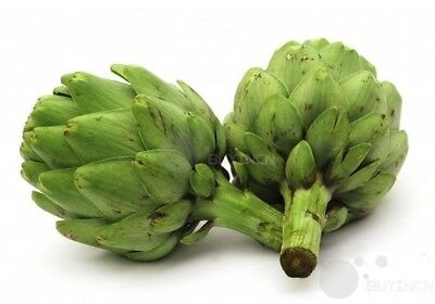 Artichoke Seed 4 seeds Vegetable Garden yard Patio Plants balcony Bonsai
