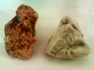 2 palm Figurines from the Jordan Valley. Paleolithic period. RARE find.