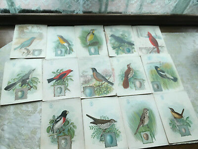 "14 Antique ""American Singers"" Bird cards Singer Manufacturing Co. 1898 & 1899"