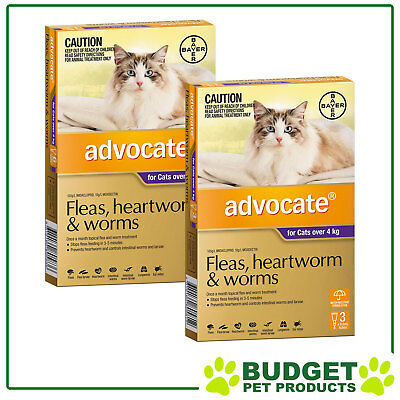 Advocate For Cats Large Over 4kg 9 DOSES