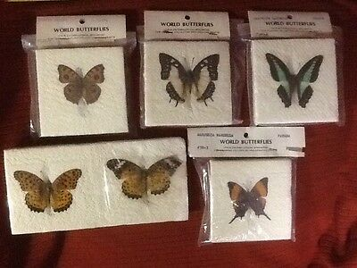 Six Real World Butterflies - True Entomological Specimens for Framing and Crafts
