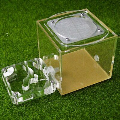 Small Acrylic Ant Nest Housing Ant Farm Formicarium With Feeding Area Outworld
