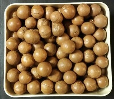 Macadamia Nuts in Shell this years crop varying sizes