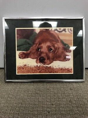 Vintage Art Picture Dog Irish Setter Puppy