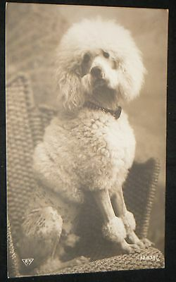 Unmarked Antique B&W Black & White Poodle Postcard BH 32839 Made in Paris France