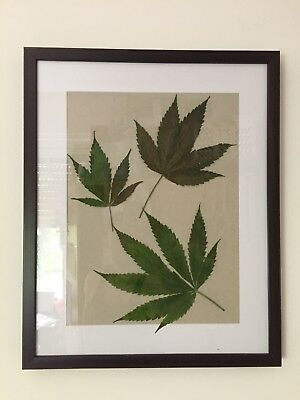Cannabis blatt Collage