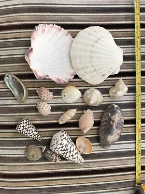 16 X Shells Sea , Mixed small Large .