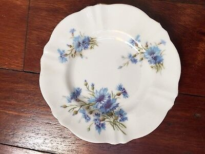 Staffordshire Plate England with Blue Cornflowers