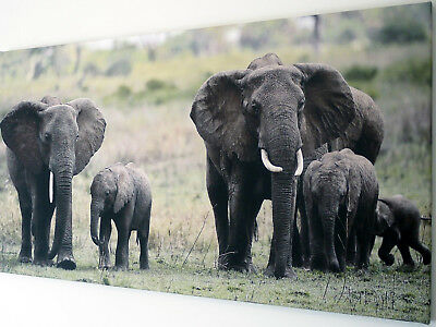 Elephant Family  Canvas Print Wall Art Picture  18 X 32 Inch