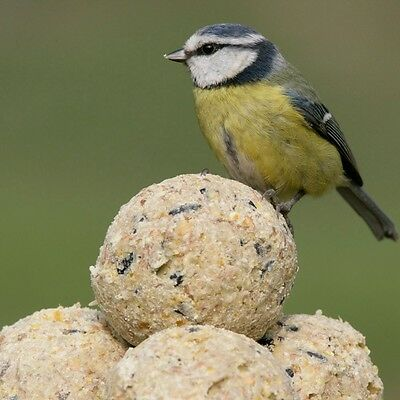 Wild Bird Food Fat Balls Without Nets Suet Dumpling-Choose From 5 To 100