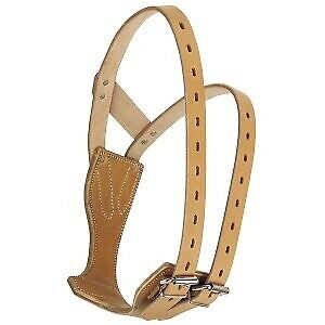 The Miracle Collar Horse And Equestrian