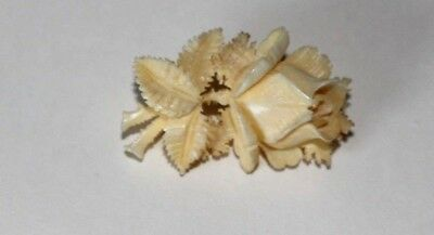 Beautiful Antique Hand Carved French Dieppe Rose Flower Brooch / Pin.