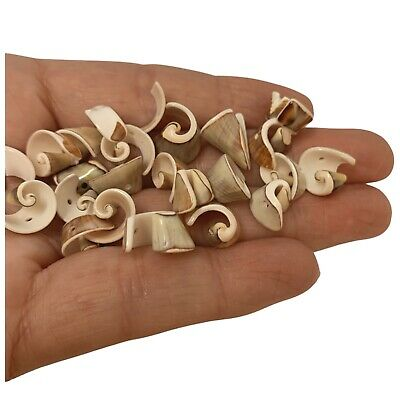 25 x Drilled Gorgeous Craft Shells Seashells for Craft & Beads Jewellery SH50