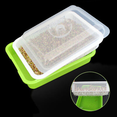 Seed Sprouter Tray Soil-Free Wheatgrass Mung Bean Seed Sprouting Growing PP