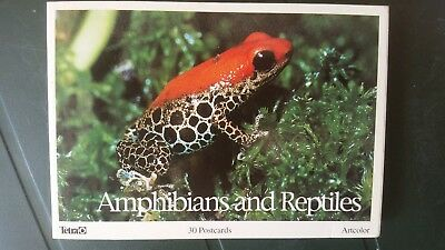 Amphibians and Reptiles - 30 Postcards