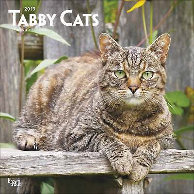 Tabby Cats Calendar 2019 Cats Month To View