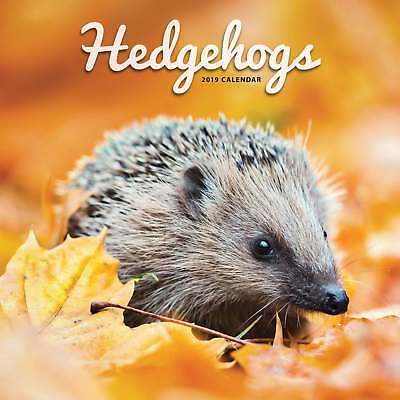 Hedgehogs Calendar 2019 Animals Month To View