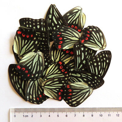 32 pcs REAL BUTTERFLY wing jewelry butterfly material ooak DIY artwork  #54