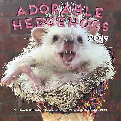 Hedgehog Mini Calendar 2018 - 2019 Humour Month To View