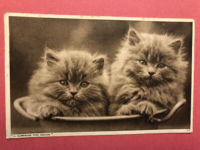 "Vintage Sepia Photochrom Postcard Persian Cat Kittens ""A Surprise For Cookie"""