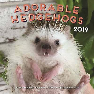 Adorable Hedgehogs Calendar 2018 - 2019 Animals Month To View