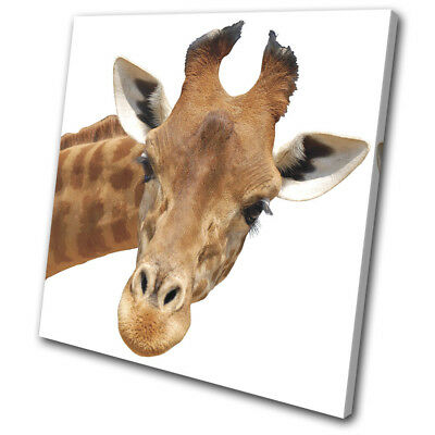 Giraffe Head Wild Zoo African Gift Animals SINGLE CANVAS WALL ART Picture Print