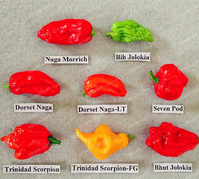 Worlds Worlds Hottest Seeds,8 Hottest Pepper Pepper,rare Pepper Chili 100 Pcs