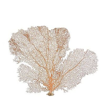 Natural Sea Fan Coral - Red 7-10