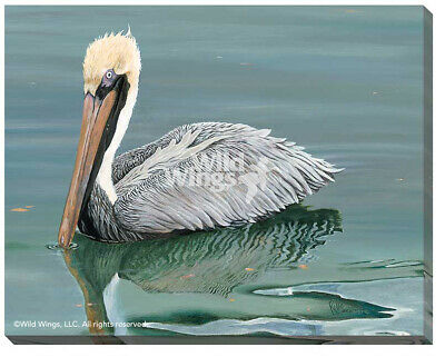 Brown Pelican Wrapped Canvas by Rollie Brandt