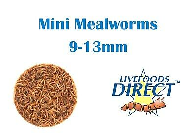 Live Mini Mealworms Tub 55g Livefoods Direct Reptile Food Live Insects Bird food