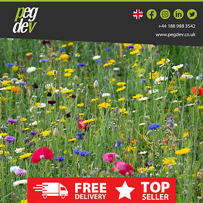 100% Native Wild Flower Meadow Mix Scented Seed Perenial Heritage Flower Bee