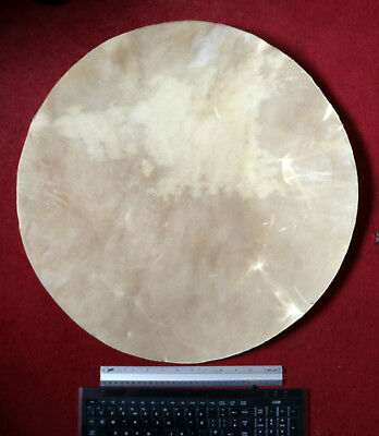 Cow Rawhide Large 24 inch disc for making shamanic drum, drum making, Pagan