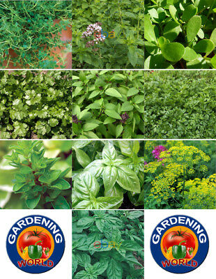 1000 Culinary Herb Seed Garden Collection - 10 Different Herbs w/ Gift
