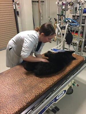 $200 Donation Bear Necessities Cub House Campaign - Pay a Vet Bill