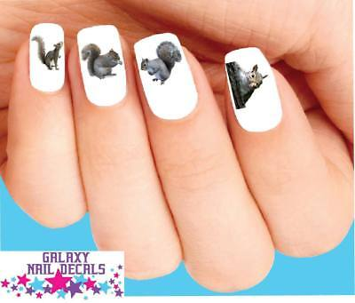 Waterslide Nail Decals Set Of 20 Squirrel Orted