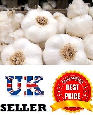 "Garlic Cloves ""Solent Wight"" From Bulbs - Viable Cloves- UK SELLER"