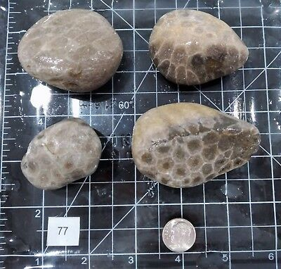 LOT OF 4  LARGE BEAUTIFUL UNPOLISHED PETOSKEY STONES SMOOTH CRAFT Hexagonaria