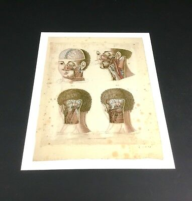 A3 Anatomy Medical Print Wall Art Picture Giclee Surgery Educational Teaching