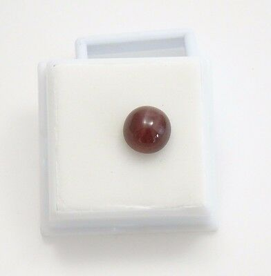 Beautiful Cat's Eye Scapolite -10mm Round - Cabochon
