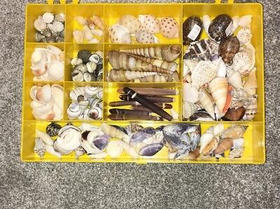 Lovely Large Selection Of Assorted Shells