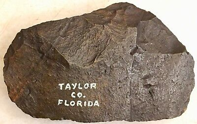 PERFECT One Million Year Old Early Stone Age TAYLOR COUNTY FLORIDA Hand Axe