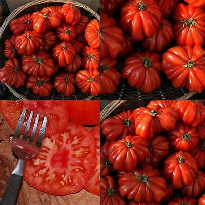 50pcs Hot Rare Sweet Tomato Fruit Vegetable Seeds Home Garden Plant Seeds