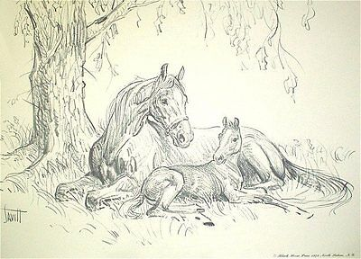 MARE AND FOAL UNDER TREE Charcoal Horse Print By Sam Savitt 1973 Free Shipping