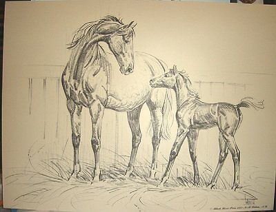 MARE AND FOAL IN STABLE Charcoal Horse Print By Sam Savitt 1973 Free Shipping