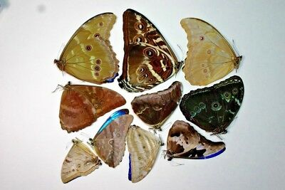 10 Mixed Morpho's in A1 Condition