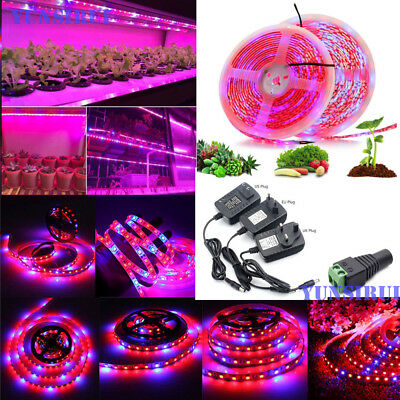 DC12V 5M 5050 LED Grow Lights LED Strip Plant Growth Light with 3A Power Adapter