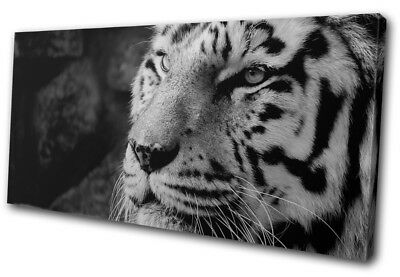White Siberian Bengal Tiger   Animals SINGLE CANVAS WALL ART Picture Print