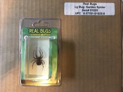 Sealed Case Of 8 Real Bugs Japanese Garden Spiders..Free Shipping