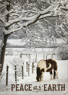 Brown and White Horse in Snow Lori Deiter Box of 18 Country Christmas Cards