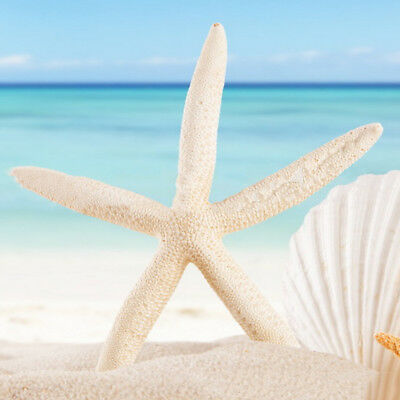 12Pcs White Finger Starfish Pointer Sea Beach Wedding Coastal House Crafts Decor